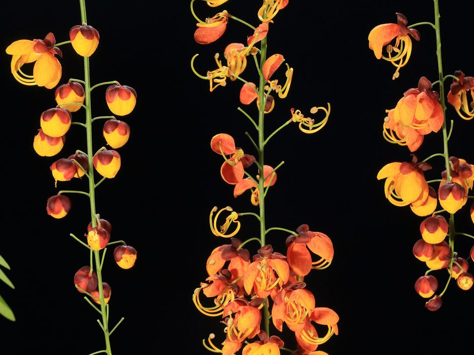 Ilha de Coíba: Flora Abundante