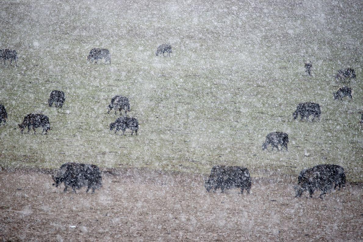A Spring Snowfall