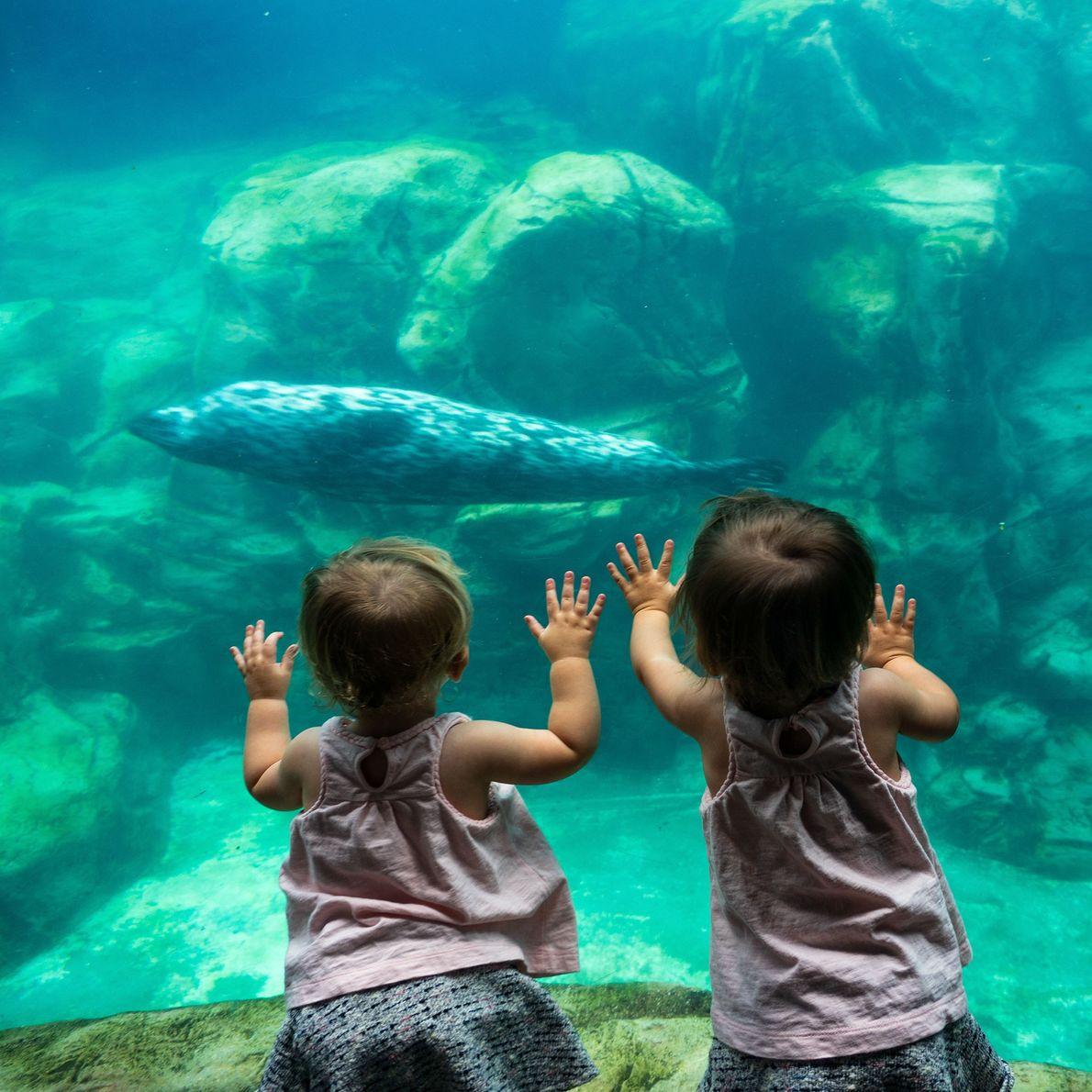 Crianças observam uma foca-comum no Aquarium of the Pacific em Long Beach, na Califórnia.