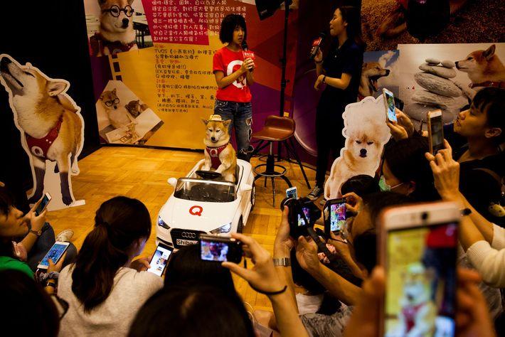 Q Jiang, um live streamer canino muito famoso, num encontro com os fãs em Kaohsiung, Taiwan. ...