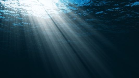 10 Formas de Contribuir para Salvar os Oceanos
