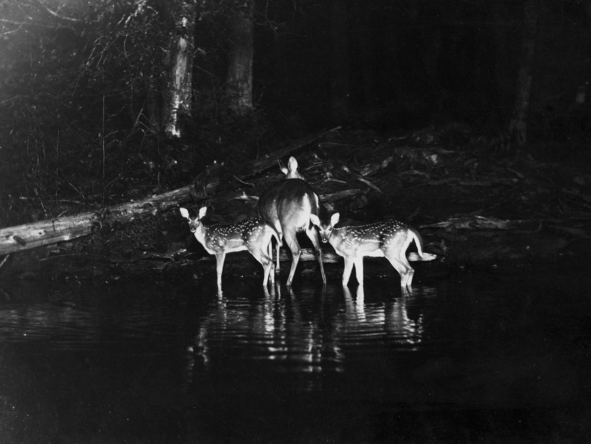 Primeiras Fotografias Noturnas de Animais Selvagens
