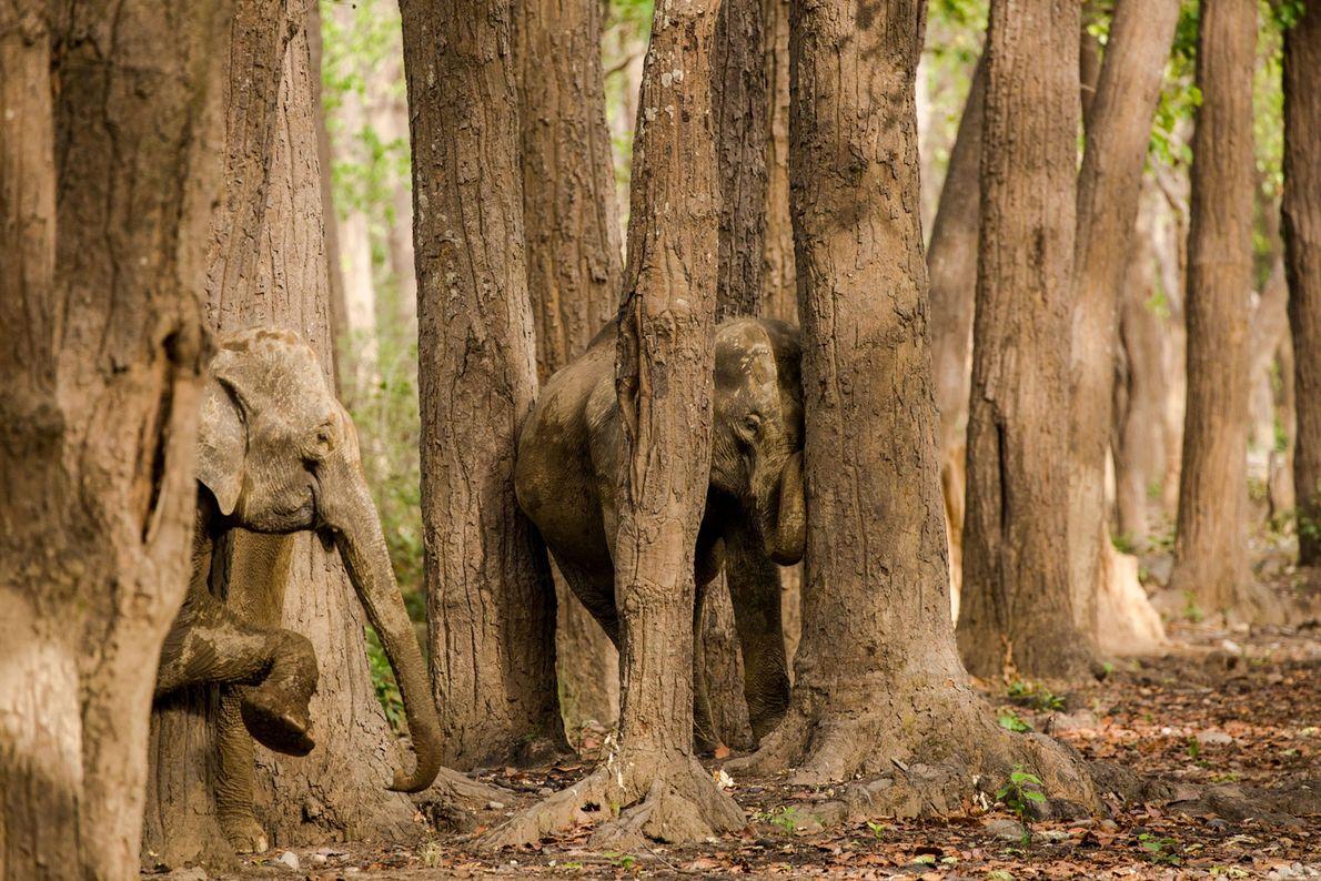 animais camuflados