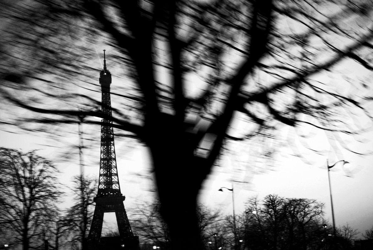 Árvore com a Torre Eiffel ao fundo