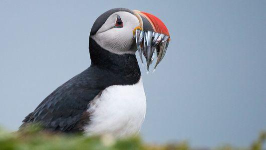 As Melhores Fotografias de Aves para a National Geographic