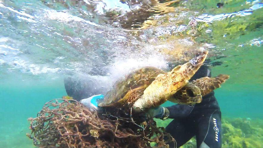 Salvamento de Tartaruga Marinha: Presa numa rede de pesca