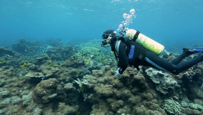 As cinco principais palavras do mergulho