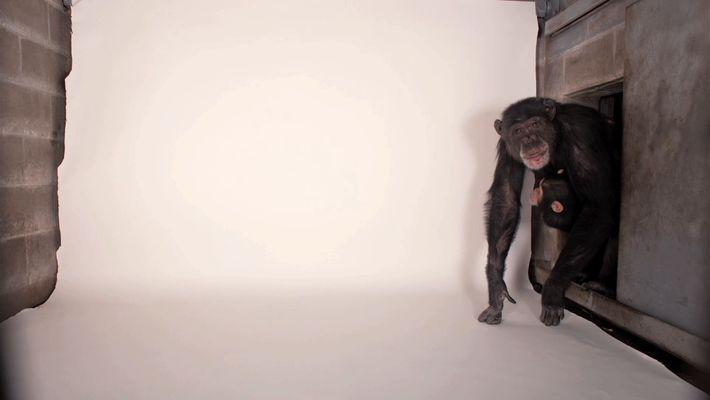 Veja: Fotografar 12,000 Animais É Um Trabalho Árduo