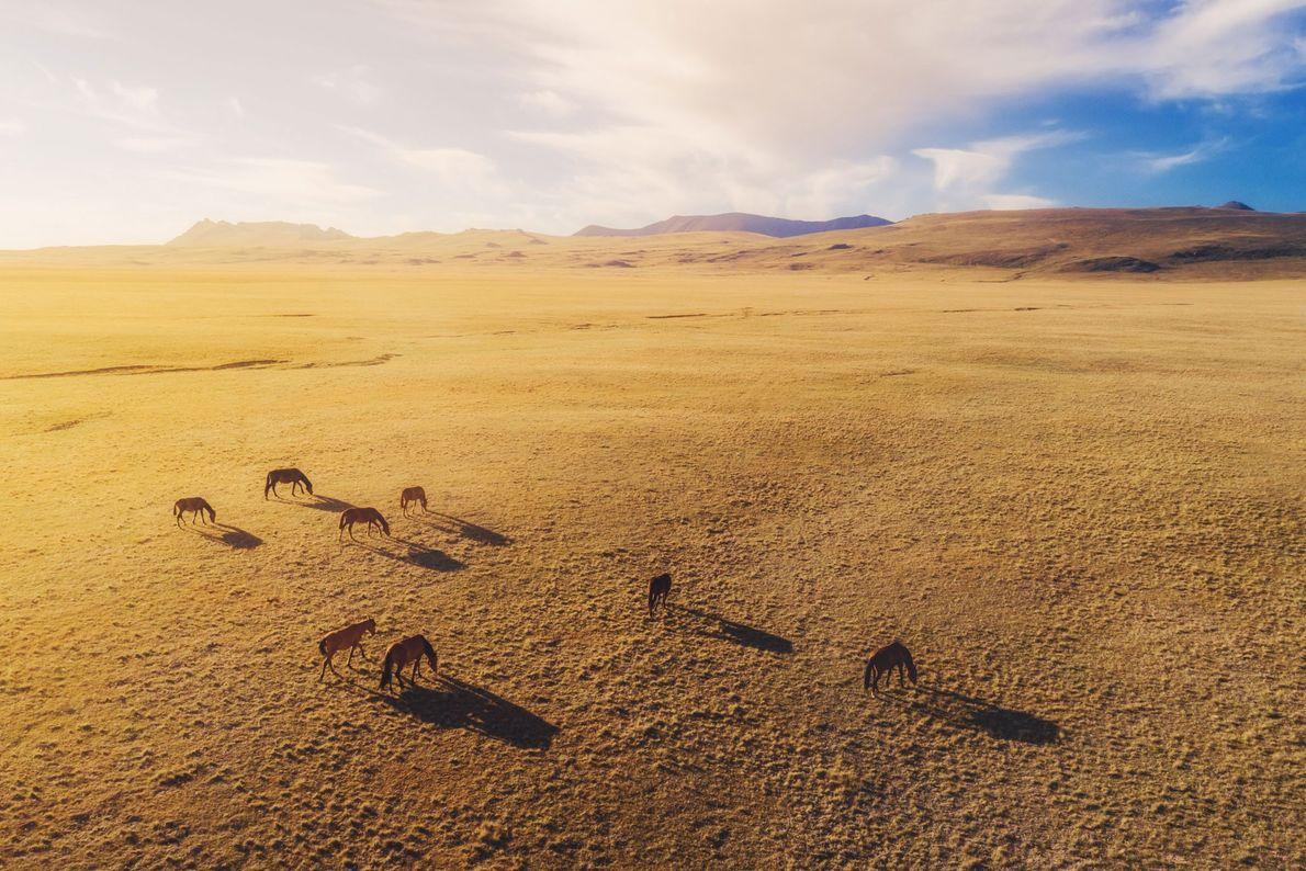 Cavalos. Quirguistão