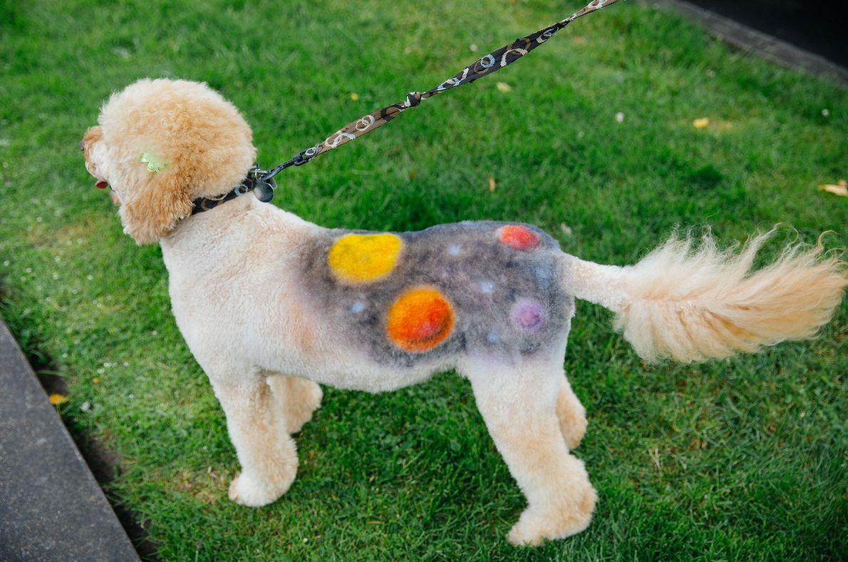 Um cão pintado com imagens de outro mundo para o concurso de máscaras de animais, integrado ...