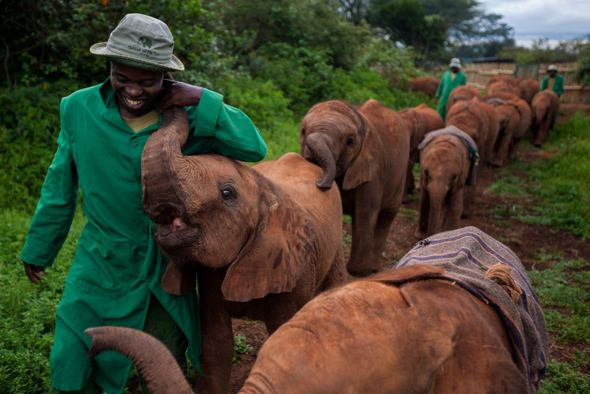Tratadores de elefantes