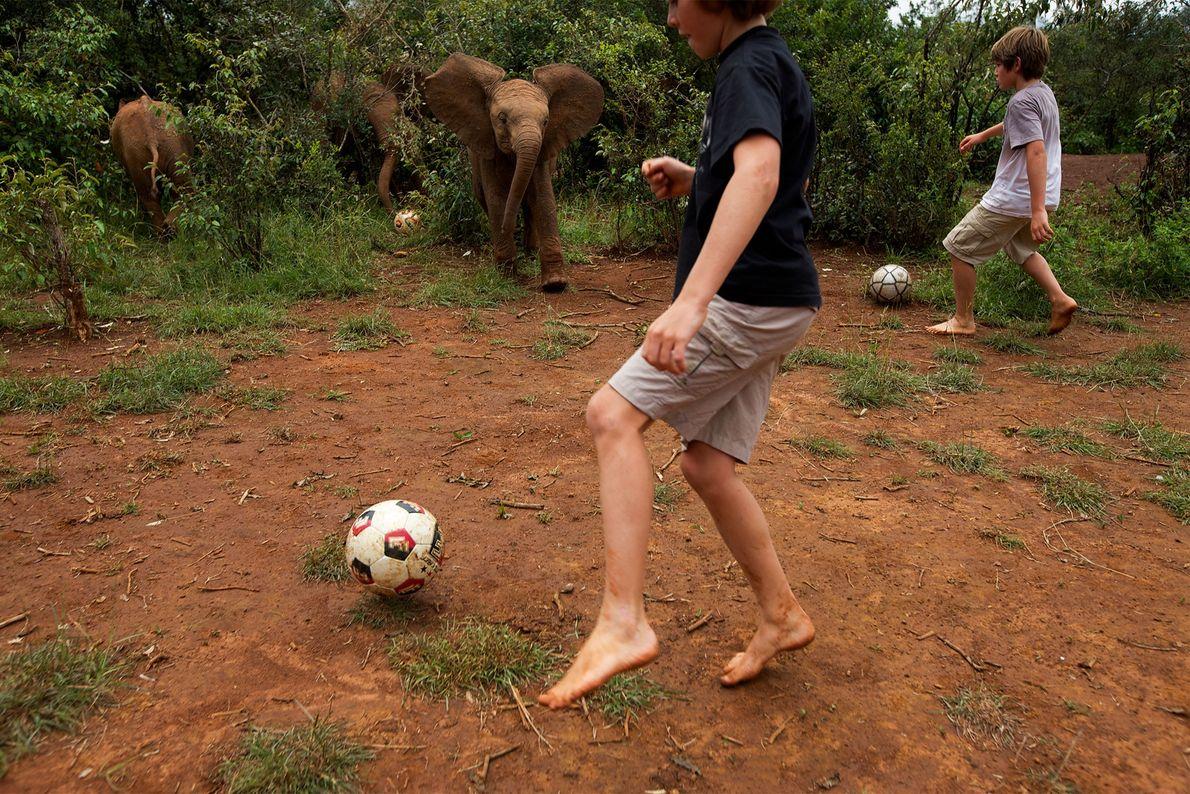 Dois rapazes jogam futebol perto de crias de elefante orfãs.