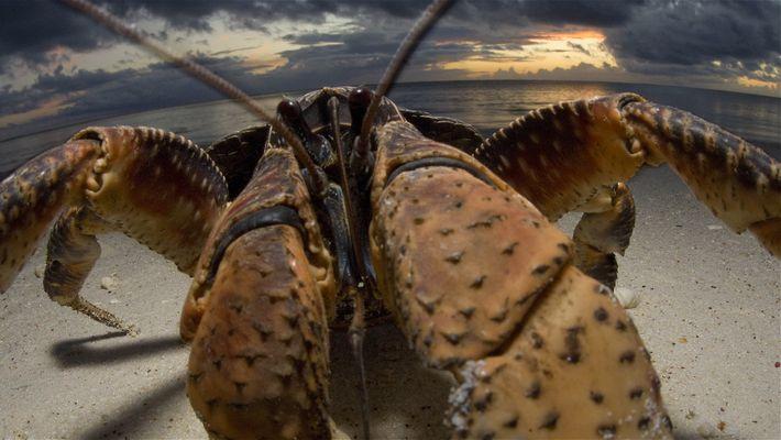 Crabzilla: Fotografar um monstro-carangueijo
