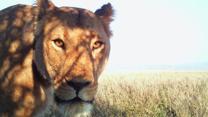 Selfies Animais do Serengueti