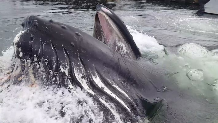 De Perto: Uma Baleia Jubarte perto de uma Marina