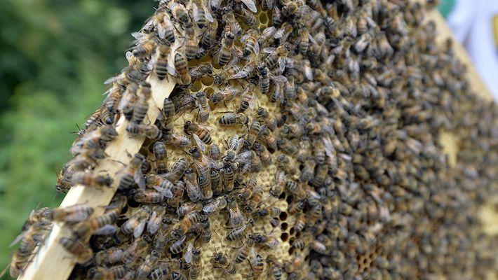 Entraria numa sala cheia de abelhas?