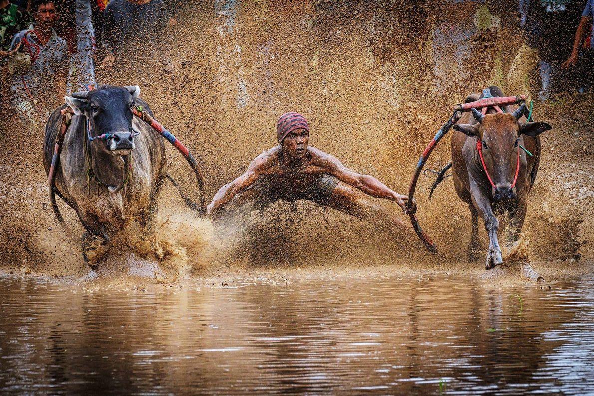 Corrida de touros, Indonésia