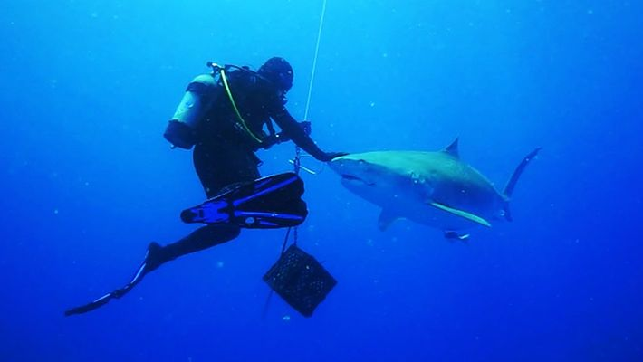 Veja Um Tubarão Chegar A Centímetros de Mergulhadores num Encontro 'Mágico'.
