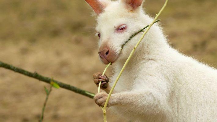 Surpreendentes animais brancos como a neve dos seus sonhos de inverno