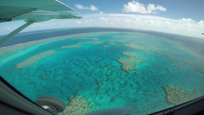 A Grande Barreira De Coral Pode Estar A Morrer Mais Rápido Do Que Pensamos
