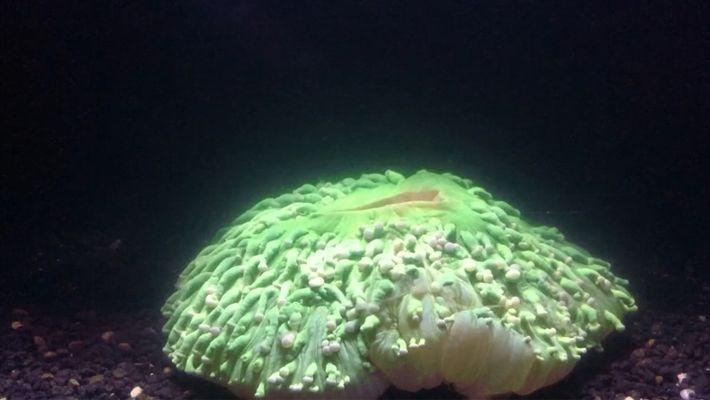 O aquecimento dos oceanos provoca branqueamento dos corais