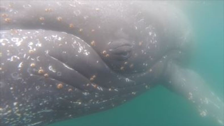 Vista do Olhar da Baleia
