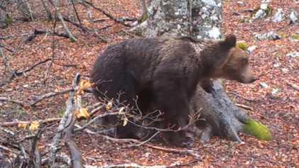 Um Vídeo Captou uma Árvore Durante um Ano - e Todos os Animais que Apareceram