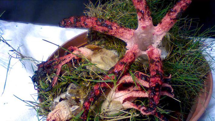 Veja um cogumelo a nascer assemelhando-se a um polvo… ou aos dedos do diabo.