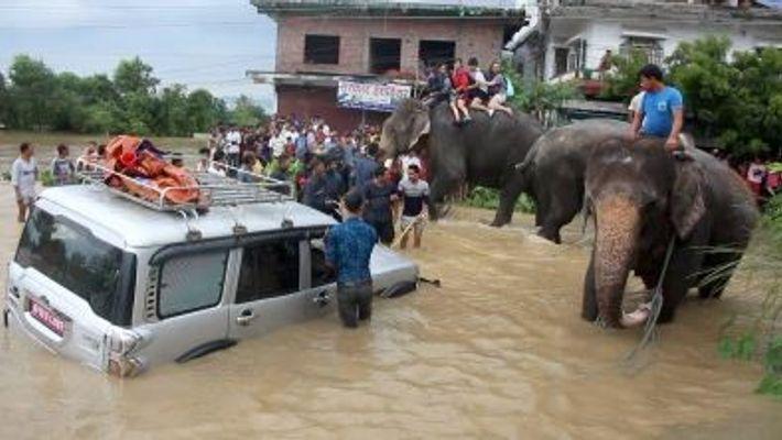 Elefantes Salvam Centenas de Pessoas de Cheias