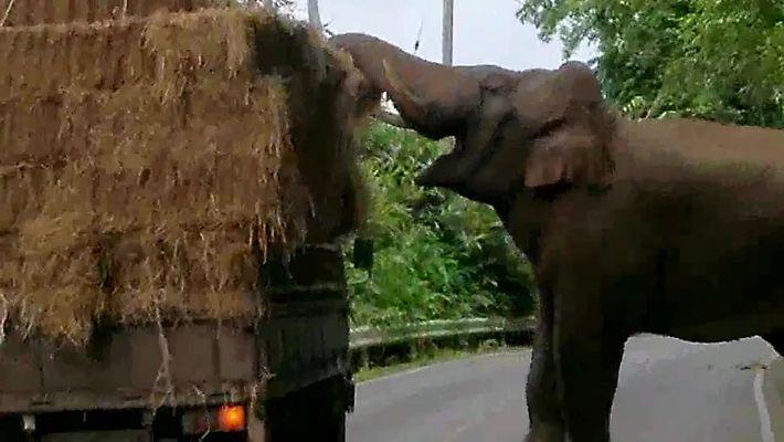 Elefante Participa em Roubo na Auto-estrada