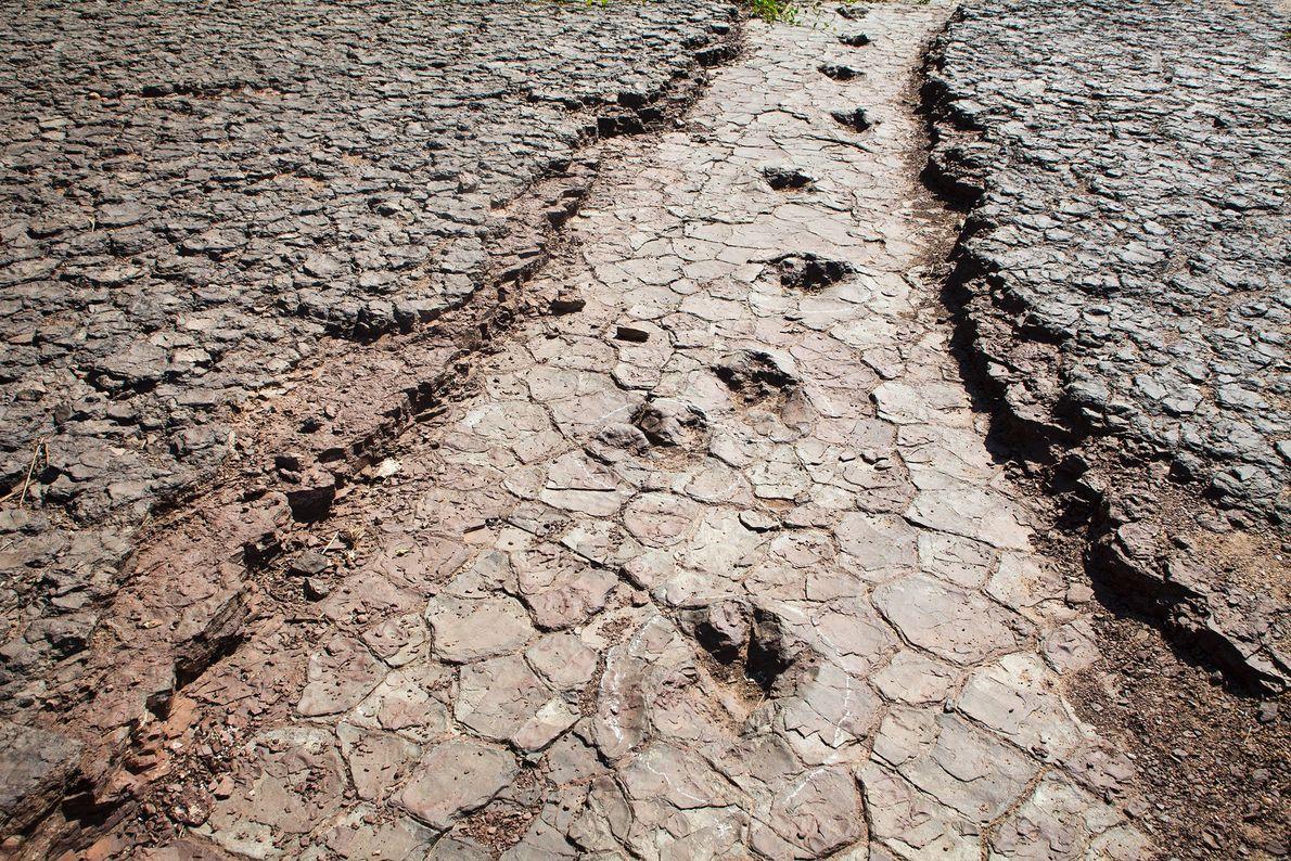 conjunto de pegadas de dinossauros atravessa o Vale dos Dinossauros, em Sousa, no nordeste do ...