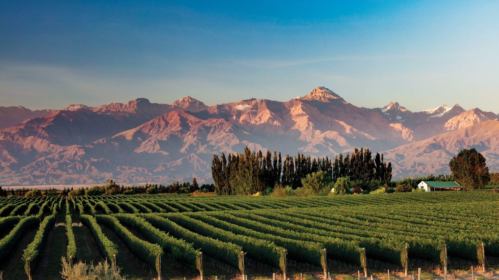 Em Mendoza, os Andes formam o cenário de fundo para as vinhas do Vale do Uco, ...