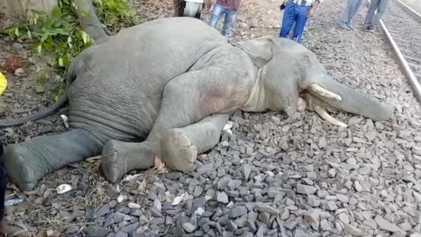 Elefantes Atingidos por Comboios na Índia Representam um Desafio para os Conservacionistas