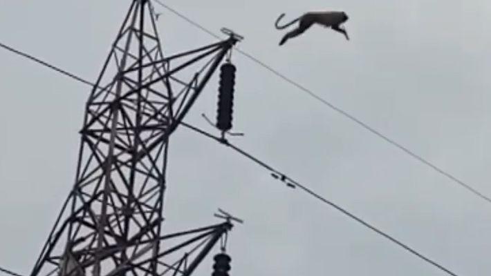 Observe um Macaco Desafiar a Física em Salto de Uma Torre