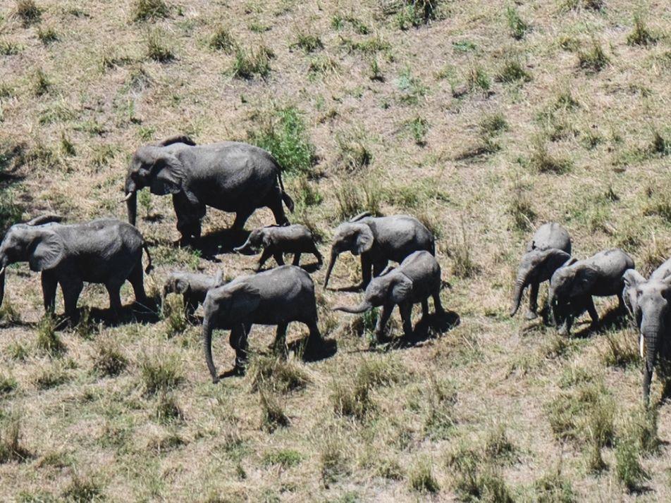 A Guerra Civil Devastou a Vida Selvagem -  Veja Como Se Recupera Neste Parque Nacional.