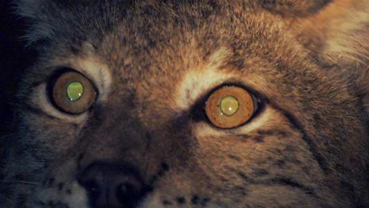 Que Animais Possuem Visão Noturna?
