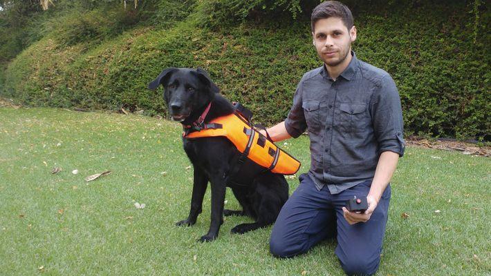 Veja Um Cão Responder a Comandos Sem Voz Através de Colete Vibratório