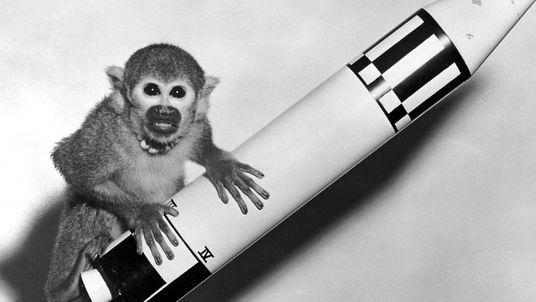 Fotografias mostram momentos históricos de animais e humanos a voar para o espaço