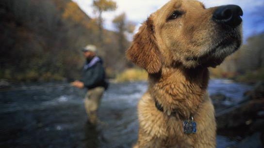 Os cães são ainda mais parecidos connosco do que imaginávamos
