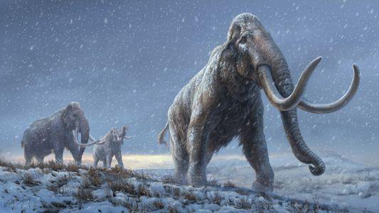 Dentes de mamute com milhões de anos contêm o ADN mais antigo de que há registo
