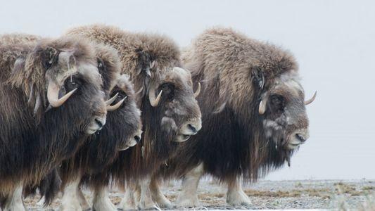 Fotografias da Vida Selvagem no Alasca