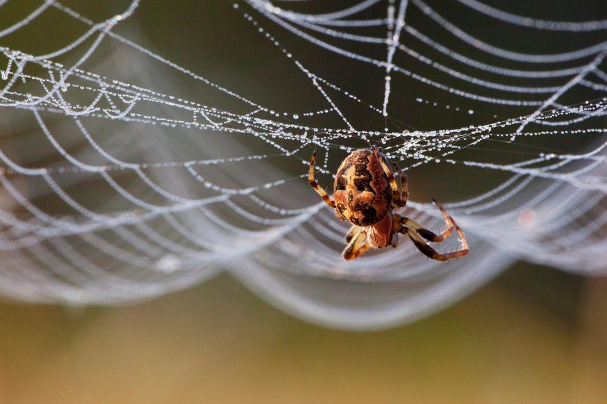 Esteja atento às teias das aranhas tecedeiras durante um eclipse.