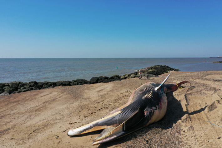 baleia na praia