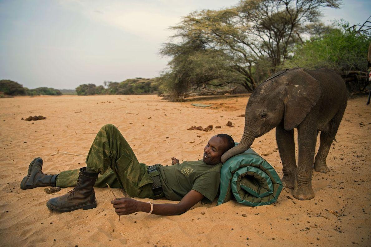 No Santuário de Elefantes de Reteti, no Quénia, um tratador de animais partilha um momento com ...