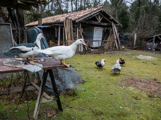Fotografias dos animais de 'O Incrível Dr. Pol'