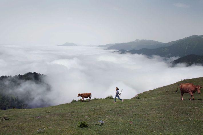 Imagem de uma criança e de um bezerro no cimo de um vale cheio de nevoeiro.