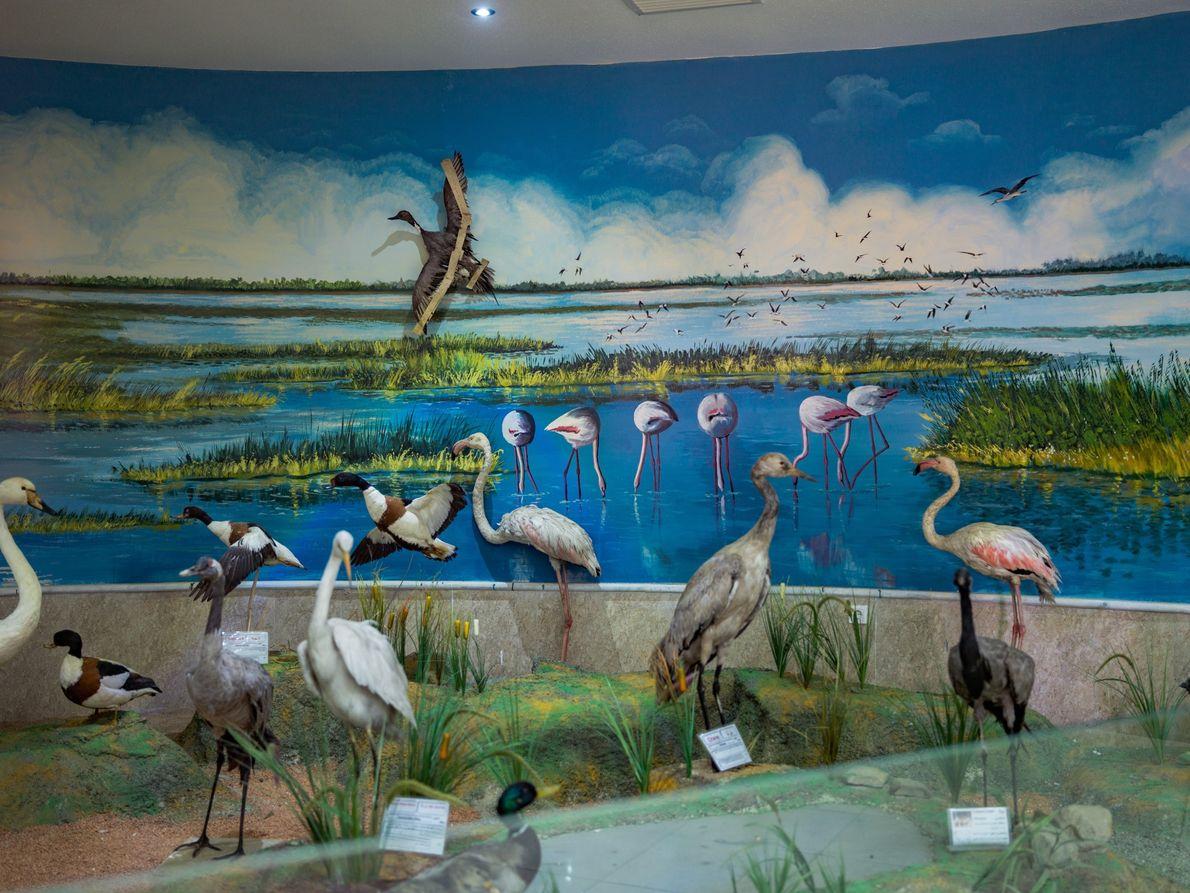Aves embalsamadas no Museu de História Natural de Urmia
