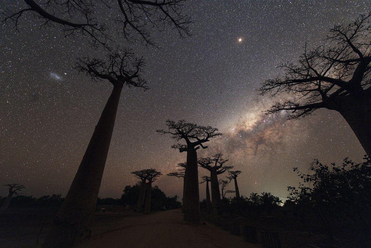 Em agosto de 2018, a fotógrafa Your Shot, Maggie Machinsky, voou 22 horas até Madagáscar para ...