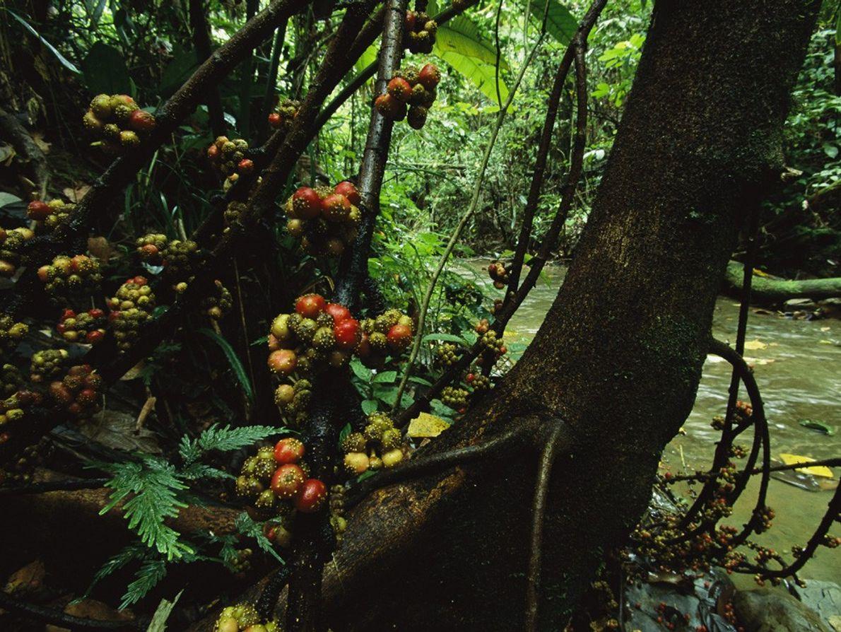 O espaço limitado nas densas florestas tropicais favorece o desenvolvimento de espécies de plantas únicas, como ...
