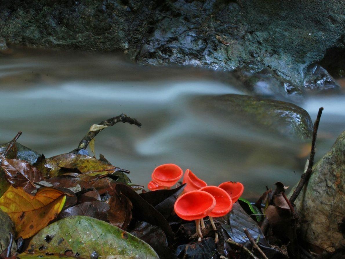 Na Costa Rica, na remota Península de Osa, vários ribeiros fluem ao longo de um dos ...